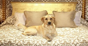 Dog Friendly Hotels in Manchester, England