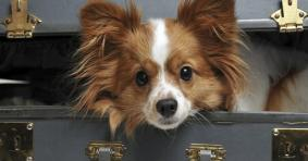 Pet Friendly Hotels in Las Vegas, Nevada