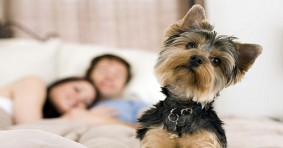 Dog Friendly Hotels in Birmingham, England